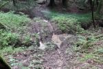 Jura - Les autorités s'attaquent à la moto sauvage en forêt